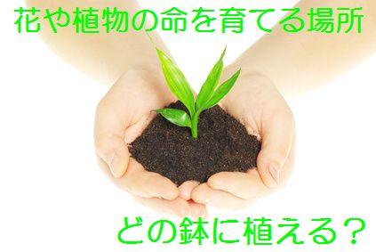 どの鉢に植える?